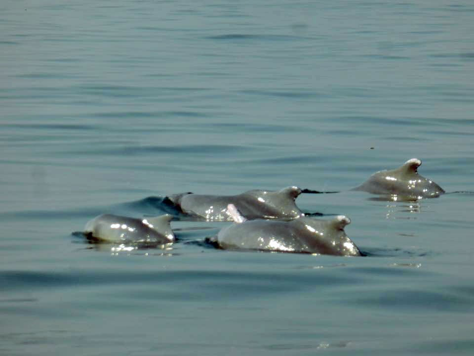 dolphin at grand island goa
